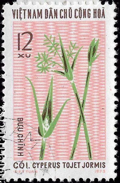 File:Cyperus tojet 20201217 (3).jpg