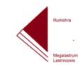 Rumohra phylo bauret 2017.png